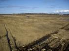 Niedru pļaušanas centieni